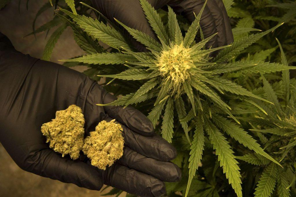 Хранение марихуаны