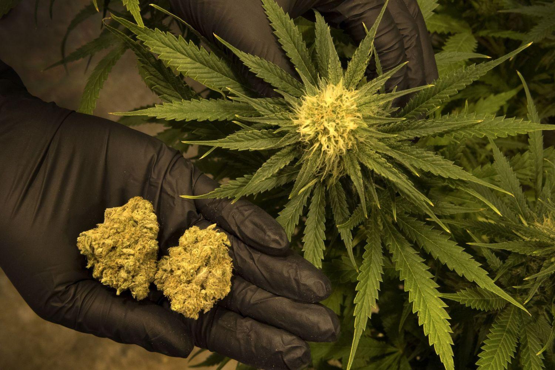 Смотреть все фото марихуаны кристаллики в марихуане