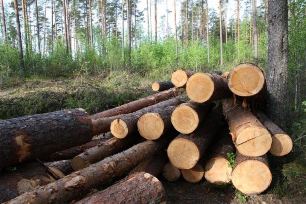 Незаконная вырубка леса: ответственность по УК РФ